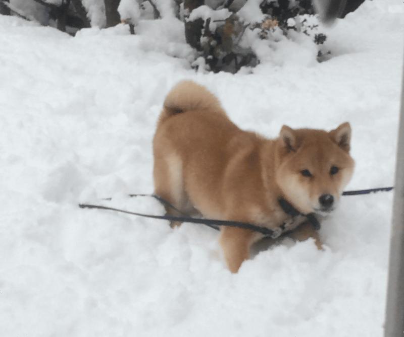 犬の雪遊び