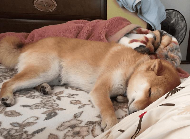 犬の朝起きる時間