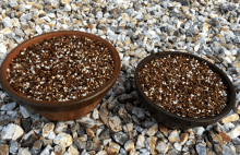 犬の食用植物